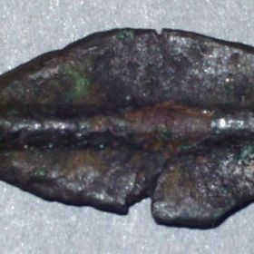 Монета Борисфениды