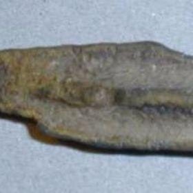 Стрело-рыбы Керкинитиды