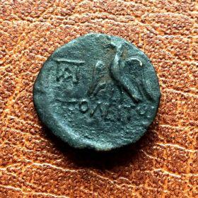Ольвия. Ассарий. 49-50 гг. н.э.